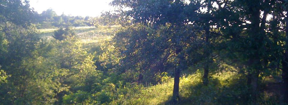 LandscapeHill.jpg